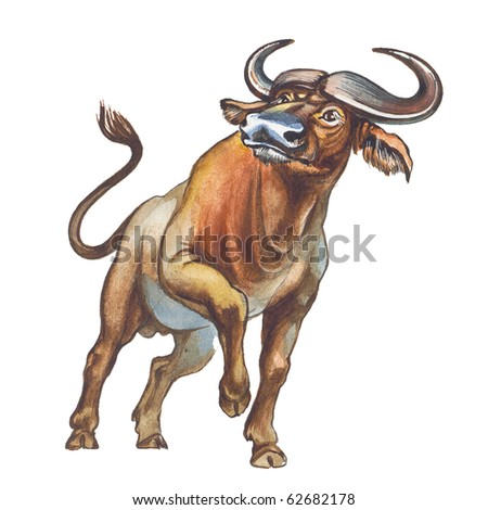 African buffalo, affalo or Cape buffalo - stock photo
