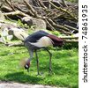 African Crown Crane - stock photo