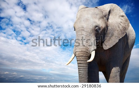 African elephant against blue sky background - stock photo