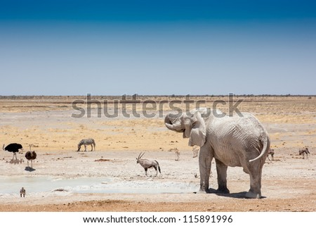 African Elephant at Watering Hole - Etosha National Park, Namibia - stock photo