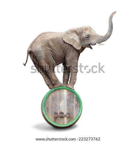 African elephant balancing on a beer barrel. - stock photo
