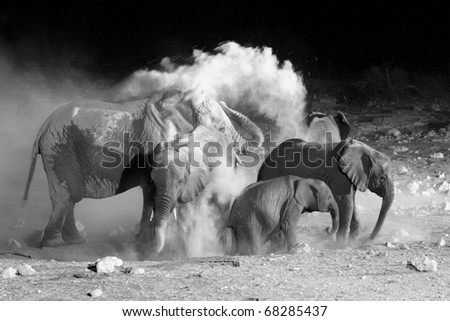 African Elephant family taking a dust bath - stock photo