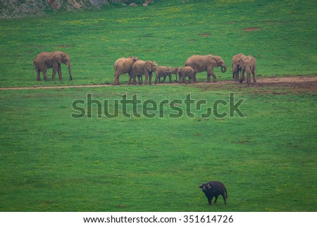 African Elephant herd drinking at water's edge in South Africa - stock photo