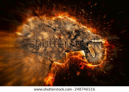 African elephant illustration with fire