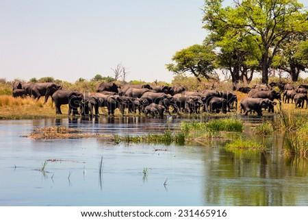 African elephant ,Loxodonta africana at waterhole in Bambata National Park in Namibia - stock photo