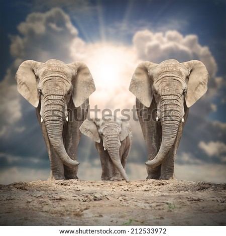 African elephant (Loxodonta africana) family on the road. - stock photo