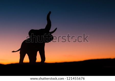 African elephant silhouette trumpeting in sunset in the wild - stock photo
