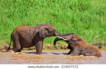 African elephants in the Tarangire National Park, Tanzania - stock photo