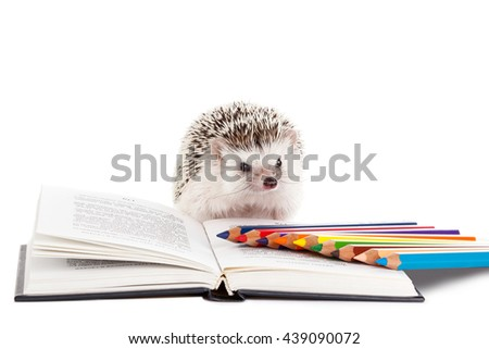 African hedgehog and book on white background - stock photo