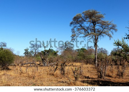 African landscape in national park nambwa on Caprivi Strip Namibia
