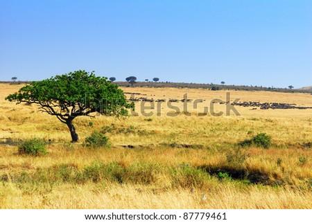 African landscape with antelope gnus, Masai Mara, Kenya - stock photo