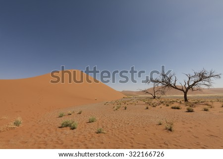 african landscape with red sand dune and dead tree in Namib desert, Naukluft Park, Namibia, Africa - stock photo