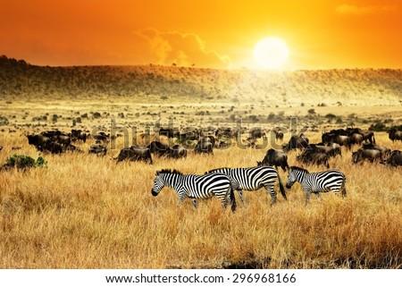 African landscape. Zebras herd and antelopes wildebeest at sunset, Kenya - stock photo