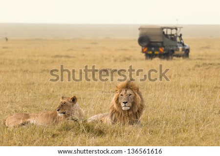 African lion couple and safari jeep in Kenya - stock photo