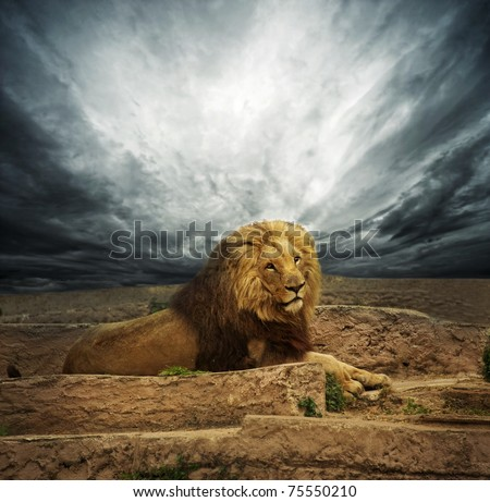 African lion in the desert - stock photo