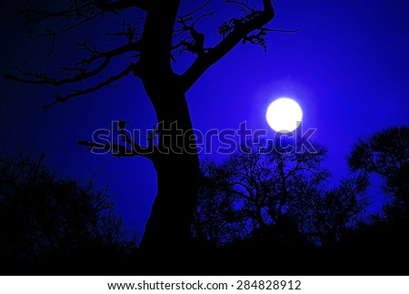 African night in the Kruger National Park - stock photo