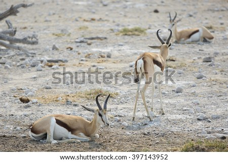 African Oryx in the desert - stock photo