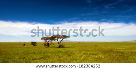 African panorama in Serengeti national park - stock photo