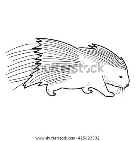 African Porcupine - stock photo