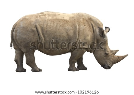 African Rhinoceros isolated on a white background - stock photo