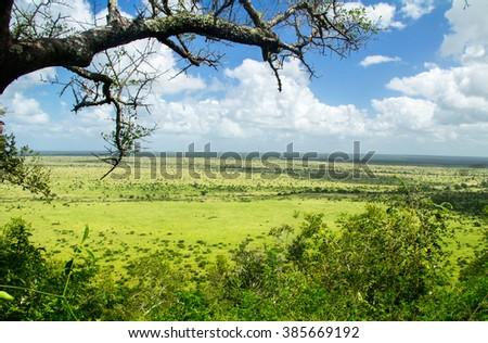 African savanna landscape, South Africa  - stock photo