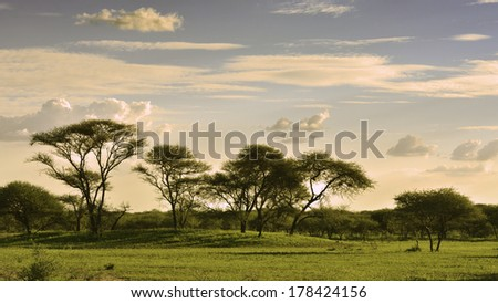 African savannah in the late afternoon light, sunset time - stock photo