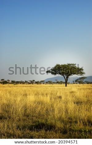 African Savannah Landscape - stock photo