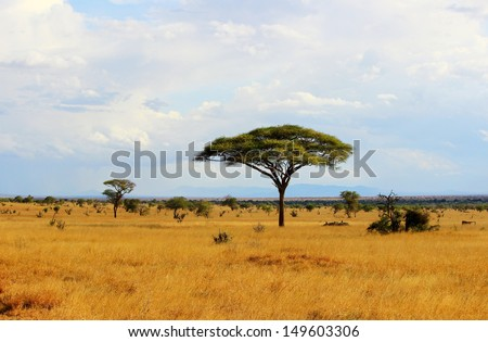 African savannah landscape in Tsavo East National Park, Kenya - stock photo