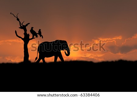 african scene with silhouette elephant tree eagle sunset - stock photo