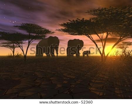 African sundowner - stock photo