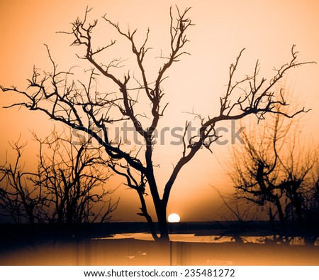African sunset in delta - stock photo