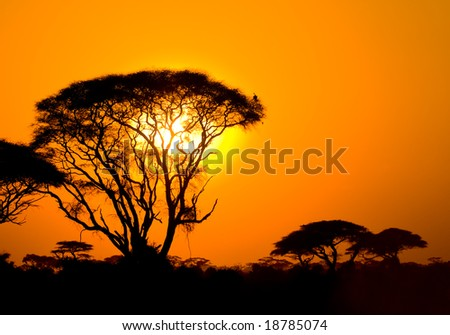 african sunset in savannah, kenya - stock photo