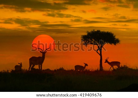 African sunset with silhouette of the animals - stock photo