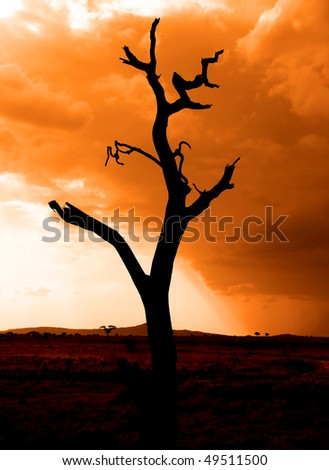 African sunset with storm and tree trunk