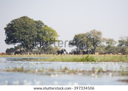 African water with elephants while sitting in a canoe - stock photo