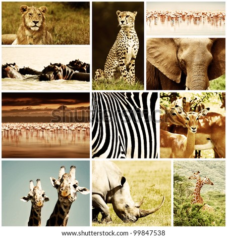 African wild animals safari collage, large group of fauna diversity at African continent, natural themed collection background, beautiful nature of Kenya, wildlife adventure and travel