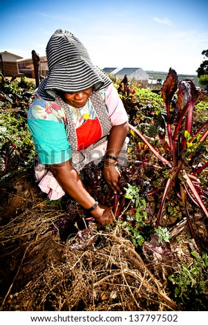 african woman hard at work in her vegetable garden wearing a big sunhat - stock photo