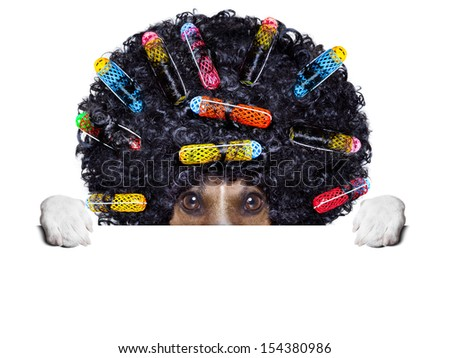 afro look dog with very big curly black hair hiding behind blank banner - stock photo
