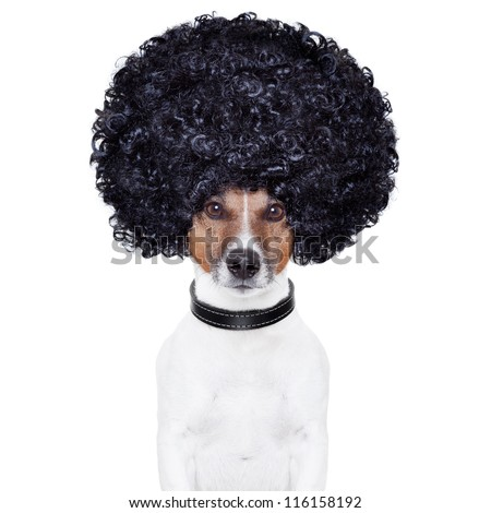 afro look hair dog funny - stock photo