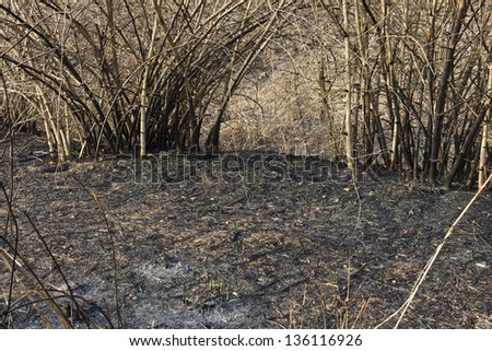 after a forest fire - stock photo