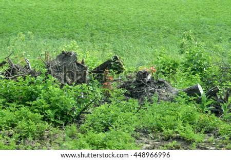 After deforestation. - stock photo