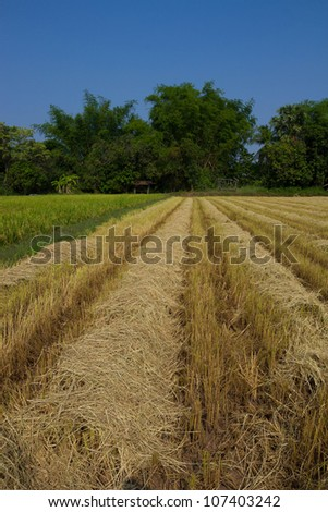 After harvest - stock photo