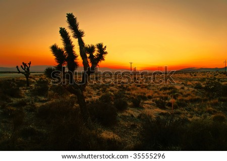 After sunset in the desert of California