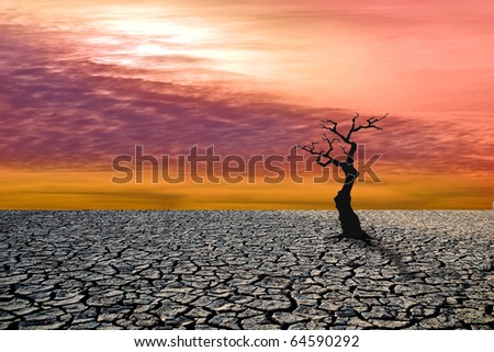 After the apocalypse. The last tree - stock photo