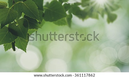 After the rain. Abstract seasonal backgrounds with green foliage and water drops - stock photo