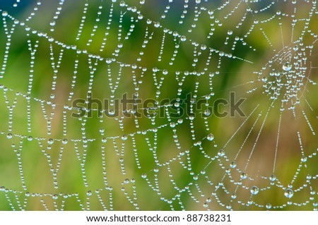 After the rain, the hidden beauty of this cobweb appears. - stock photo