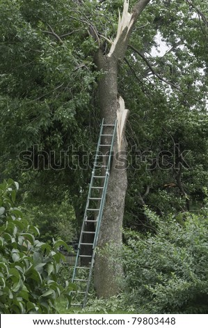 Extension Ladder Stock Images Royalty Free Images