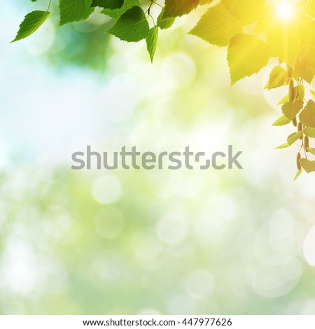Afternoon cast, abstract summer backgrounds with green leaves and sun beam