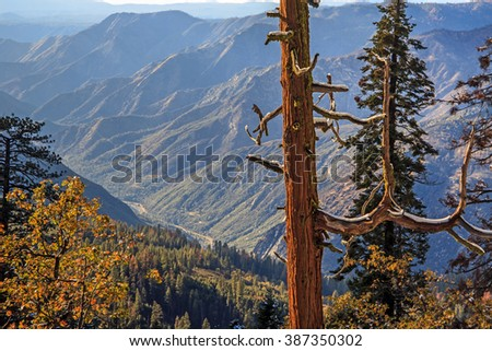 Afternoon looking west at the Stanislaus National Forest above the Merced River at the entrance of Yosemite National Park, California. A Sequoia tree holds melting snow on its dead branches. - stock photo