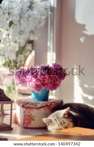 against the window with a color in the sun sleeps house cat - stock photo
